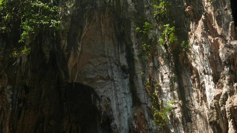 Magnificent forest in sunshine cave wall side edge, insects fly dry leaves swirl Footage