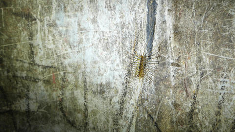 Stone Centipede on the wall of Dark Batu Cave, close up view Footage