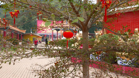 Cool little red Chinese lantern on the tree, new year decoration Footage