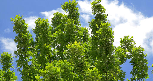 4K Tree Branches And Foliage Waving On The Wind stock footage