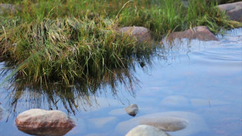 Shore with big stones and green grass. Calm water surface. Summer. Close up Footage