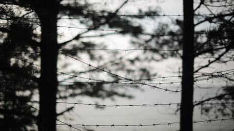 Barbed wire fence. Silhouettes of trees on background. Summer evening. Jail Footage