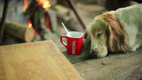 Reddish dog sleep on wooden surface. Empty cup. Campfire on background. Summer Footage