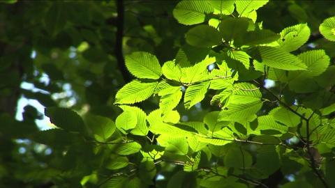 Leaves rustling in the wind Stock Video Footage