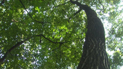 Sunlight filtering through the trees Stock Video Footage