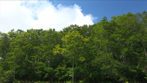 Trees swaying in the wind Stock Video Footage