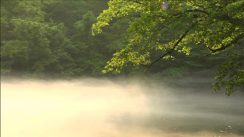 Early morning pond Stock Video Footage