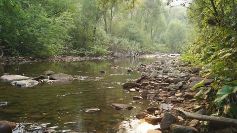 Forest Creek Landscape 03 Stock Video Footage