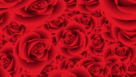 Rose 72348 Animation