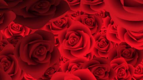 Rose 72397 Animation