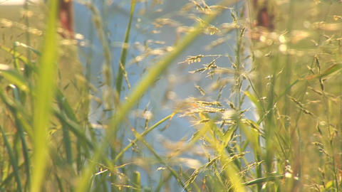 woman in grass f Stock Video Footage