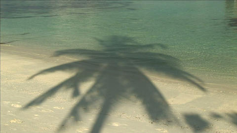 Shadow of a palm tree Stock Video Footage