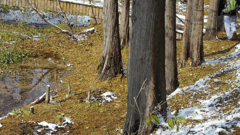alone hiker walking in Forest,bridge reflection in... Stock Video Footage