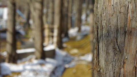 Green forest trunk in winter Footage
