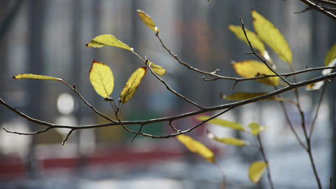 Green shrub leaves in wind,germinate,sprout,bud Stock Video Footage