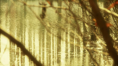 Forest and branches reflection in swamps wetlands... Stock Video Footage