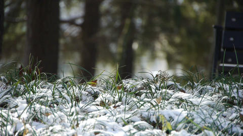 Snow covered grass,swaying in wind,Woods tree and jungle Footage
