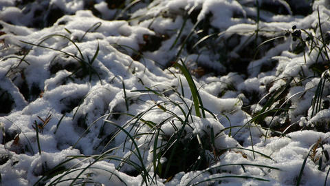 Snow covered grass,swaying in wind Stock Video Footage