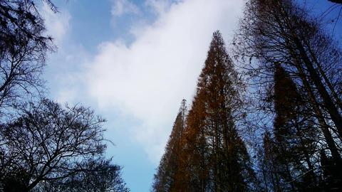 Flowing clouds,Trees crown sway in... Stock Video Footage