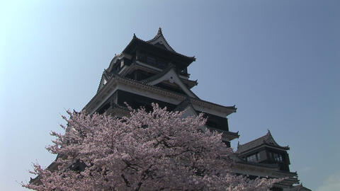 Kumamoto Castle and the cherry tree Stock Video Footage