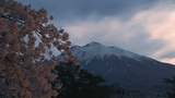 Cherry tree and mountain Stock Video Footage