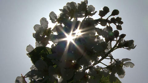 Spring. Sunbeam shining through the trees Footage