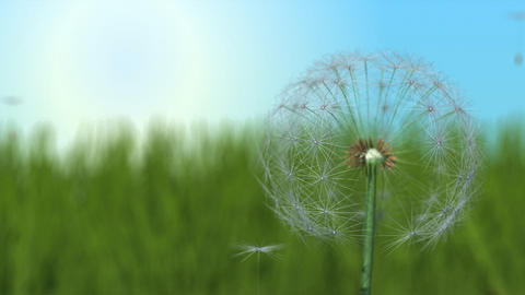 Dandelion and Seeds Animation