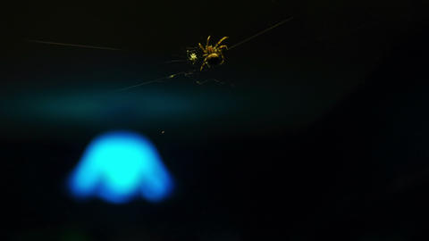 The spider weaves a web Footage