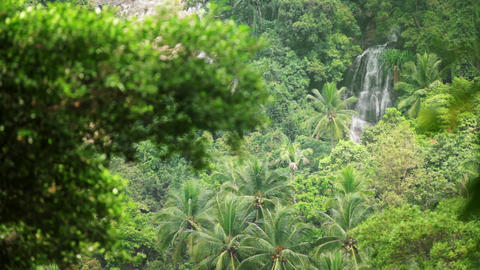 Tropical waterfall flows through dense rainforest Footage