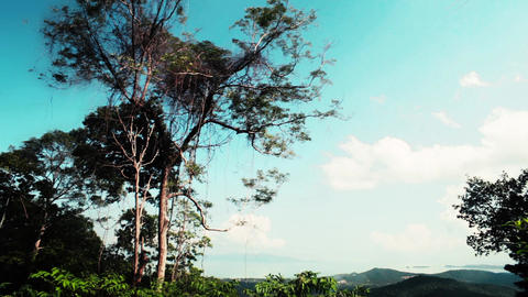 View of tropical forest in jungle. Thailand Footage