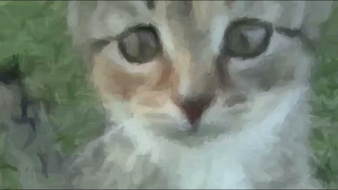 Live Painting. Cat Looking In Camera Stock Video Footage