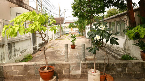 Tropical plants in pot, small bystreet between alley, walk forward Footage