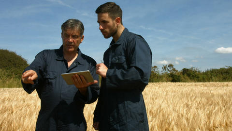 Farmers checking crops using tablet Footage