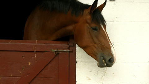 Horse eating hay in stable Footage