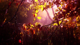 4K Romantic Autumn Morning in Small Garden 3 stylized Footage