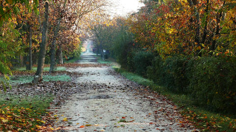 4K Wonderful Autumn Rural Road 1 Live Action