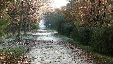 4K Wonderful Autumn Rural Road 2 stylized Live Action
