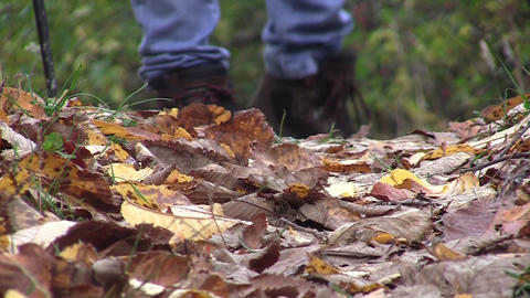 Tourist boots walking the path covered by leaves 072 Footage