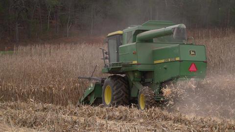 Scenes of harvesting corn Live Action