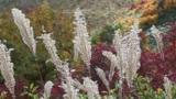 Autumnal tints Footage