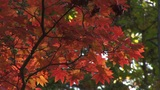 Autumnal tints Footage