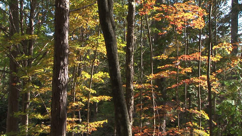 Autumnal tints Stock Video Footage