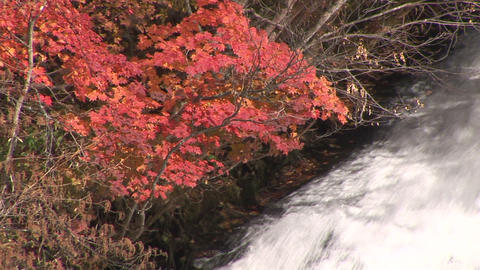 Waterfall and autumn leaves Stock Video Footage