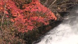 Waterfall and autumn leaves Footage