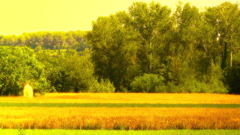 Beautiful Summer Countryside 06 stylized Stock Video Footage