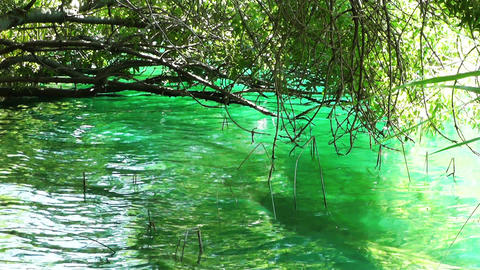 Crystal Clear Lake Shore Stock Video Footage
