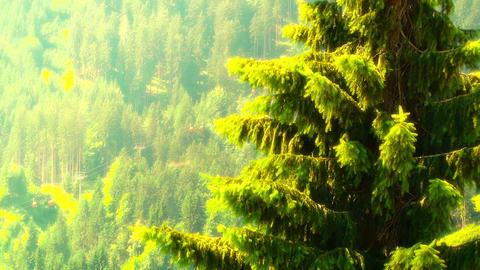 European Alps Austria 31 pine trees stylized Stock Video Footage