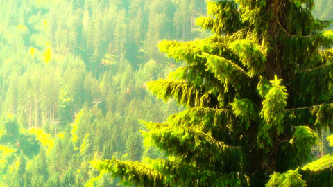 European Alps Austria 31 pine trees stylized Stock Video Footage