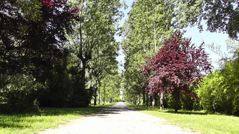 Romantic Nature Road with Trees 01 Stock Video Footage