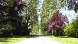 Romantic Nature Road with Trees 01 Footage